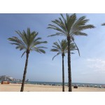2 Superb Hotels in Valencia Province Spain