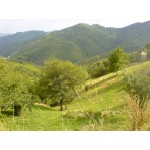 2 Detached Houses and Farm Building in Smoylan Bulgaria