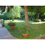 Villa - 10 mins drive from Lucca